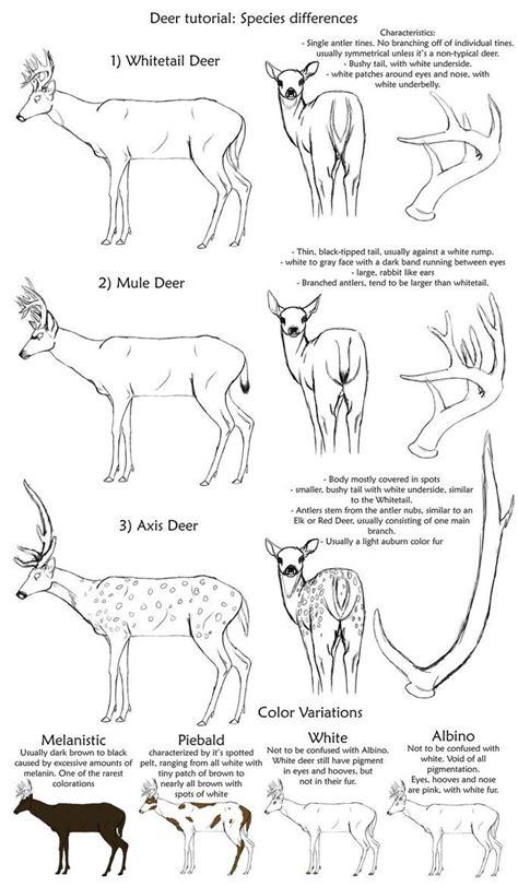 images  art deer drawings  pinterest