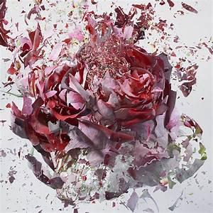 High speed flower explosions by martin klimas colossal for High speed flower explosions by martin klimas