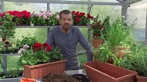 Pflanzen Automatisch Bewässern : balkonblumen automatisch bew ssern orf salzburg fernsehen ~ Frokenaadalensverden.com Haus und Dekorationen