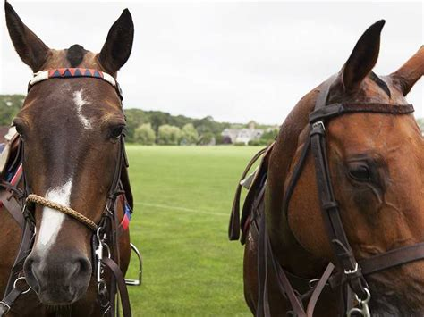 horse meat beef crisis bullying culture blamed association national