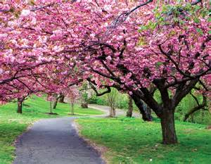 the 14 world 39 s most beautiful trees mostbeautifulthings
