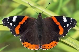 Was Machen Schmetterlinge Im Winter : schmetterlinge im winter vor der w rmefalle retten ~ Lizthompson.info Haus und Dekorationen