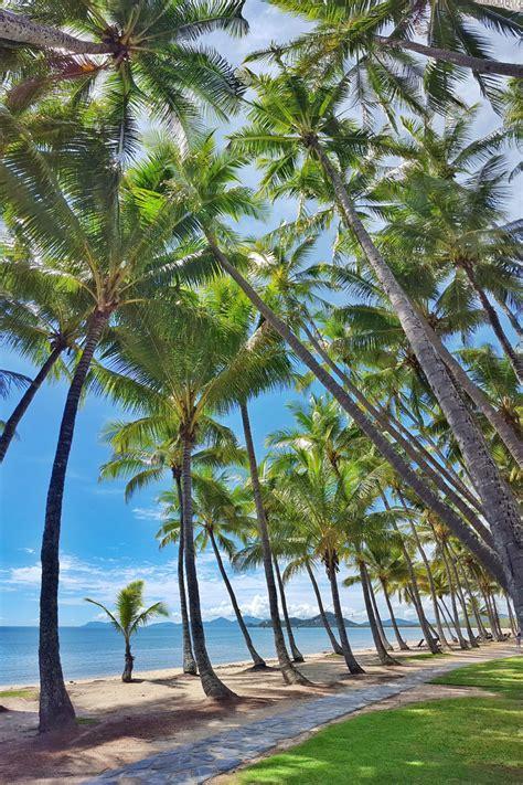 palm cove official tourism site