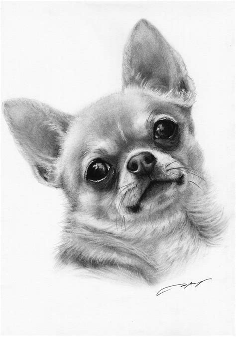 chihuahua drawings  pinterest drawing litle pups