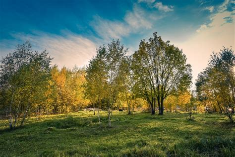 Landscape, Tree, Nature, Forest, Grass