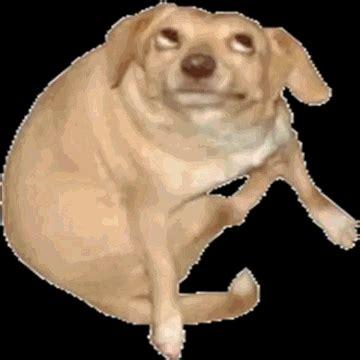 Dancing Dog Meme - 6o163 s dog know your meme