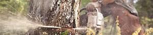Abattage D Arbres Autorisation : prix abattage arbre quel tarif pour abattre un arbre ~ Premium-room.com Idées de Décoration