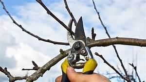 Bäume Beschneiden Jahreszeit : obstb ume schneiden fehler beim ostbaumschnitt vermeiden ~ Yasmunasinghe.com Haus und Dekorationen