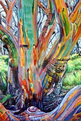 australian snow gum beauty   tree   rainbow