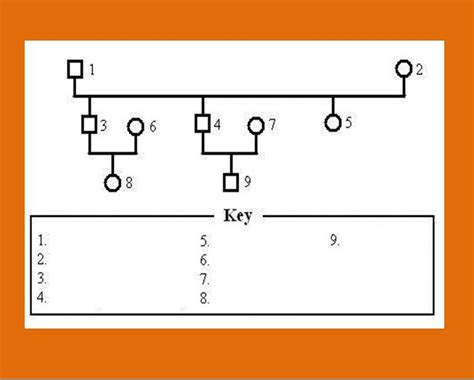 free genogram template 30 free genogram templates symbols free template downloads