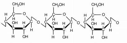 Cellulose Polysaccharides Biology Level Properties Solution Notes