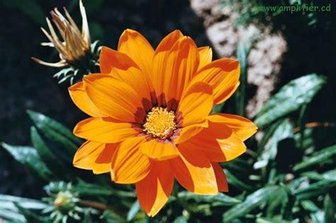 Fotos Orange Und Rote Blumen