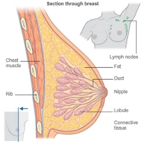 Milk Ducts In Breast Images 4 Reasons For A Breast Feeding Lump Care Health