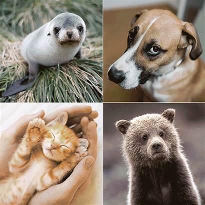 Animal Adorable Stressed Help Wsj Editor
