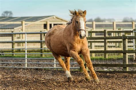 horse horses oldest worlds remus sanctuary lived lives source ihearthorses remarkably