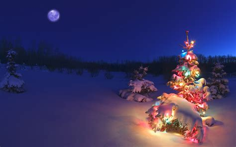 wallpaper of a christmas tree in snowy night free