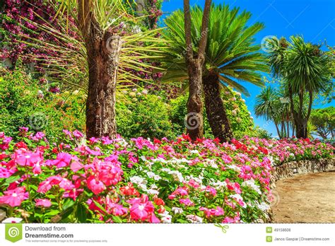 pictures of plants and trees beautiful flowers plants and trees rufolo garden ravello italy europe stock photo image 49158608
