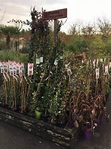 Acheter Des Plantes : acheter des plantes grimpantes d 39 int rieur et d 39 ext rieur au porge jardinerie p pini re et ~ Melissatoandfro.com Idées de Décoration