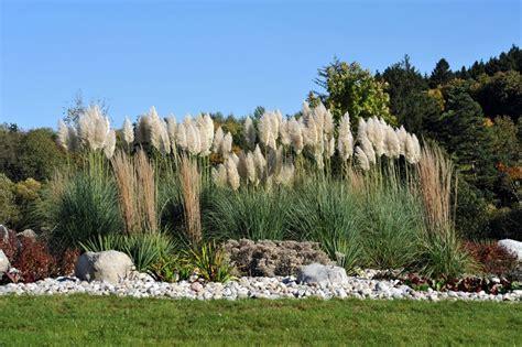 Gräser Garten Sichtschutz by Sichtschutz Im Garten 22 Raffinierte Ideen Anregungen