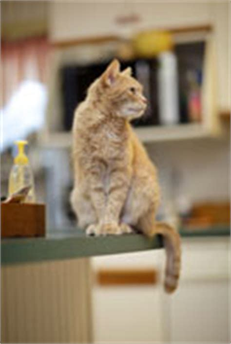 training  cat  stay   kitchen counter