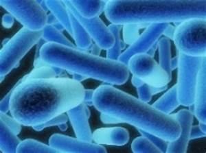 Treating Harmful Bacteria