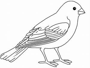 20+ Bird Coloring Pages - JPG, AI Illustrator Download