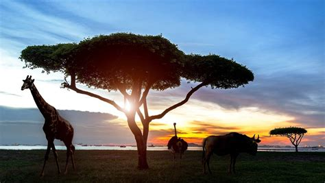 11 tips for planning your first African safari   Stuff.co.nz