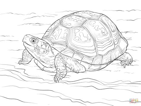 Turtle Drawing Coloring Coloring Pages