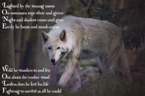 Black Wolf Quotes Wallpaper by Lone Wolf Poems And Quotes Quotesgram