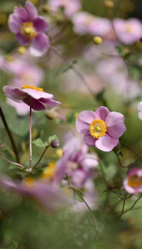 Die Schönsten Blumen Für Den Garten by Die 9 Sch 246 Nsten Blumen F 252 R Den Herbst