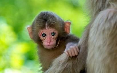 Monkey Cute Backgrounds
