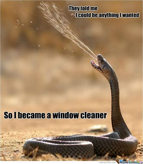 Funny Snake Memes - 25 very funny snake meme photos and images