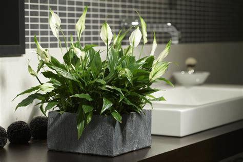 Das Sind Die 5 Besten Pflanzen Fürs Badezimmer