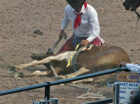 horse slaughter rodeo injured race wild horses killing loves yes them pro why they industry professional sharkonline fatally