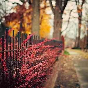 gif love favorite fall autumn season kaitlynncp •