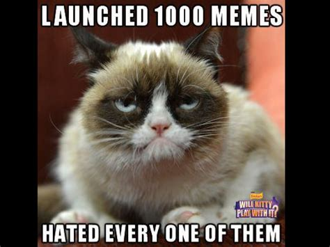 Celebrating Six Months Of Grumpy Cat (memes And Video