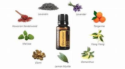 Elevation Doterra Oil Essential Joyful Blend Ingredients