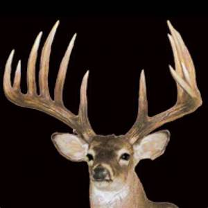 82 best images about Whitetail Bucks on Pinterest | Deer ...