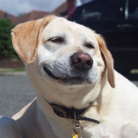 goofy dogs     smile   mojly