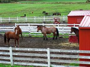 mud horse farms horses health pasture hazards lot dry way riding safety need stables stable muddy thinkstock must credit damage