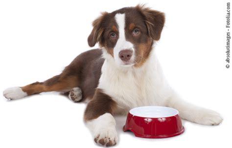 fuetterung heranwachsender hunde tiermedizin enke verlag