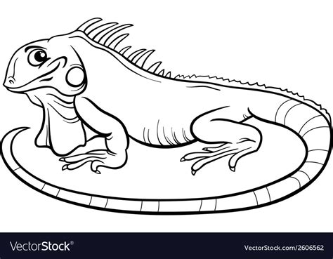 Coloring Iguana by Iguana Coloring Book Royalty Free Vector Image