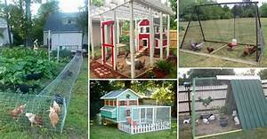 22 Low-Budget DIY Backyard Chicken Coop Plans