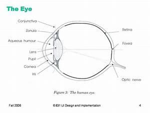 Blank Eye Diagram
