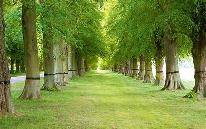 Tree Desktop Wallpapersafari