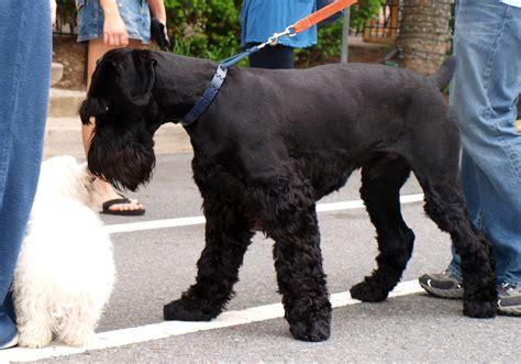 Worst  Ee  Dog Ee   Breeds To Get Along With Kids  Ee  Dog Ee   Reference