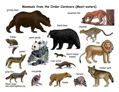 carnivores animals carnivore poster order carnivora mammals mammal meat eat exploringnature science resolution eaters posters