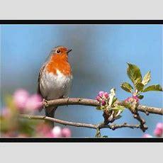 Kleine Vogel  Arie Passchier Youtube
