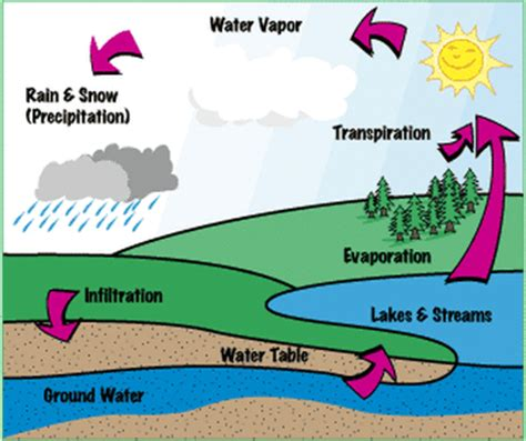 Water Cycle Diagram Earthguide by Nunez Water Savers Water Cycle
