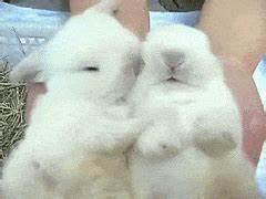 baby bunny GIFs | Find, Make & Share Gfycat GIFs